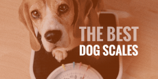 Best Pet Weighing Scale in India 2021 : Reviews and Buying guide